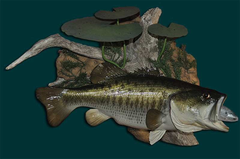 Large Mouth Bass-